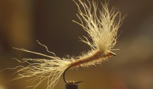 Usual dry fly designed by Fran Betters