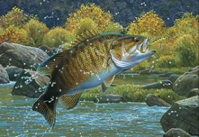 SmallmouthBassArt