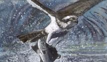 OspreyFish